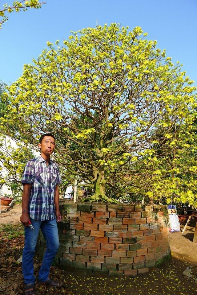 Anh Tuấn đang rao bán cây mai với giá 900 triệu đồng