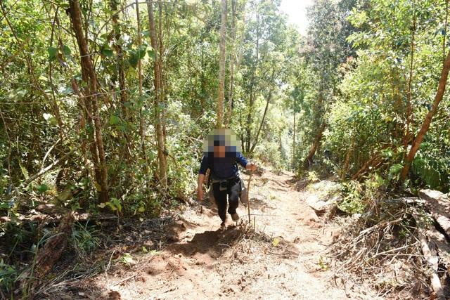 Con đường mà các đối tượng kéo gỗ lên bãi tập kết