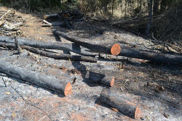 Hiện trường vụ phá rừng vừa bị phát hiện
