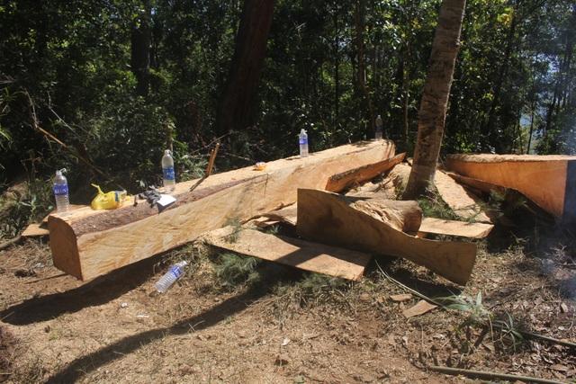 Cận cảnh bãi gỗ lậu khủng dọc đường giáp ranh