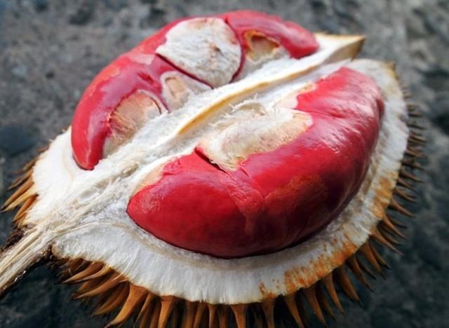 Sầu riêng ruột đỏ có vị ngọt ngọt, chua chua, và có mùi hương gần giống mùi của loại sầu riêng quen thuộc.