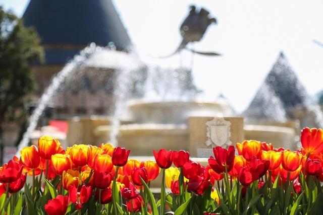 Tập trung nhiều nhất ở khu vực đài phun nước (Làng Pháp), góc ảnh hoa tuy lip vươn mình trong nắng, giữa những tòa lâu đài Pháp cổ tạo nên một khung cảnh khiến nhiều người cứ ngỡ không phải ở Việt Nam.