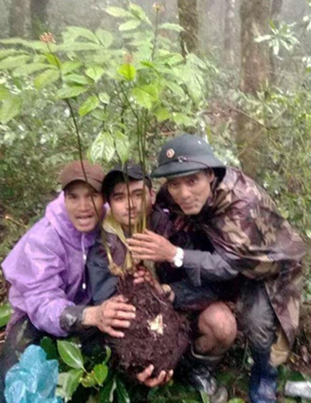 Anh Giới cùng hai người bạn đào được củ sâm Ngọc Linh tự nhiên quý hiếm.