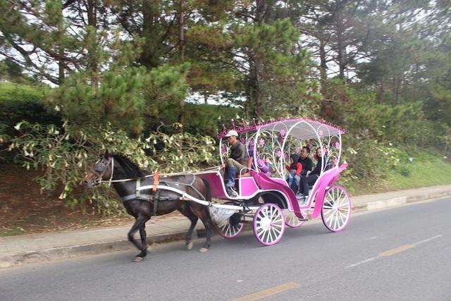 Dịch vụ tham quan trên xe ngựa hút khách