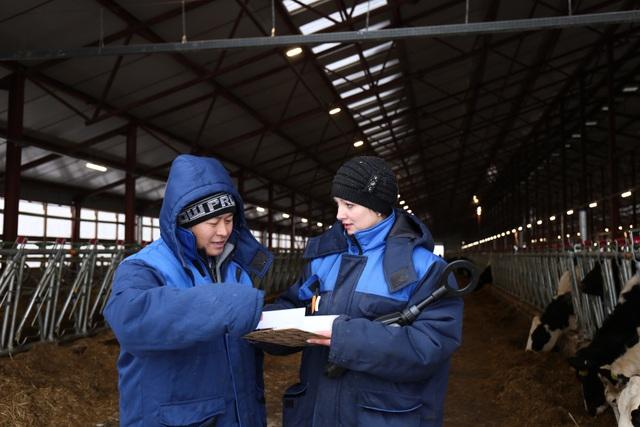 Lê Văn Thiện trao đổi với Julia- Quản lý đàn bò của trang trại bò sữa TH Moscow về tình hình sức khỏe đàn bò