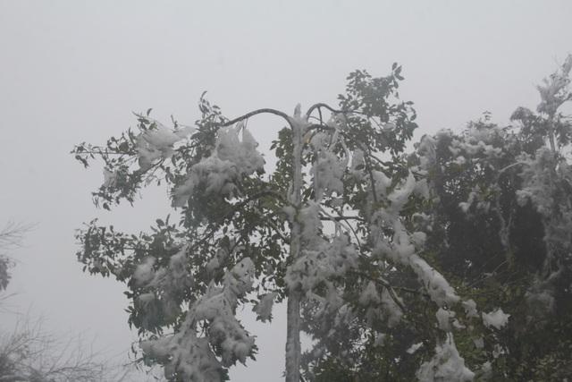 Hình ảnh băng giá dày đặc trắng xóa Mù Cang Chải - 2