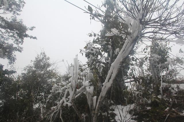 Hình ảnh băng giá dày đặc trắng xóa Mù Cang Chải - 5