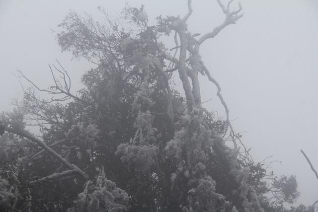 Hình ảnh băng giá dày đặc trắng xóa Mù Cang Chải - 6