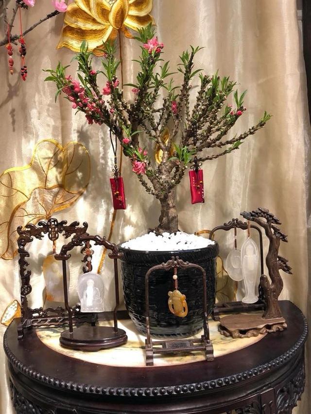 Đào Thất Thốn nhập từ Trung Quốc về hiện được bán với giá khoảng 2-5 triệu đồng/cây.