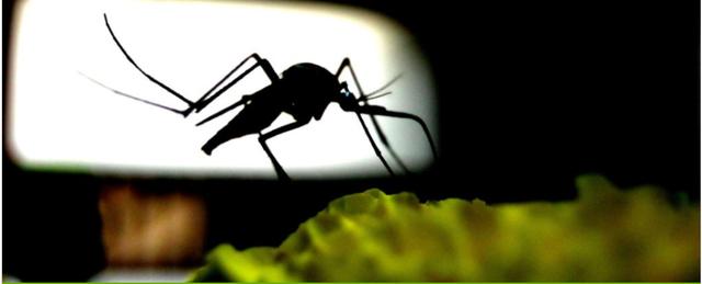 Muỗi có thể tiếp thu tốt hơn chúng ta tưởng - 1