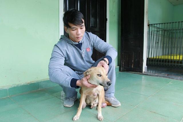 Chú chó Bạc mang nhiều khối u lớn trên cơ thể đã được anh Sơn chăm sóc và điều trị. Đến nay sức khỏe chó Bạc đã được phục hồi rõ rệt
