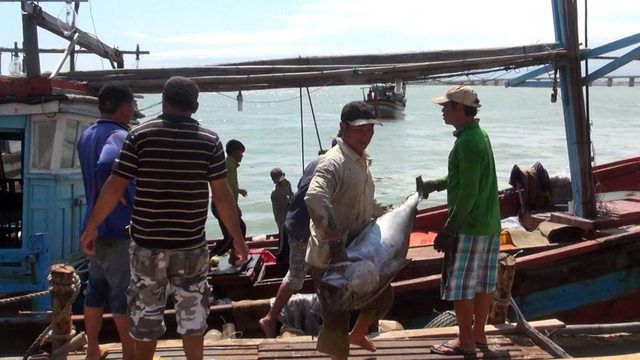 Cá ngừ được ngư dân vận chuyển từ thuyền lên bờ