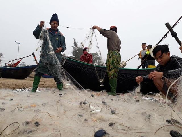 Những chiếc thuyền trở về mang theo đầy cá