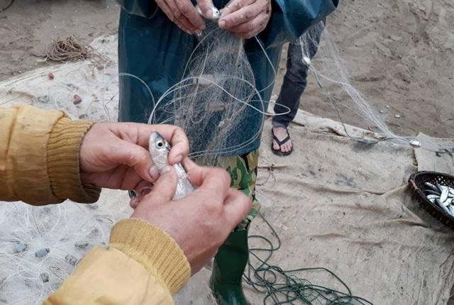 Ngư dân gỡ lưới mỏi tay