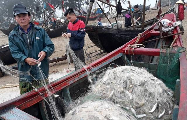 Ngư dân trúng đậm cá Kiền trong những chuyến vươn khơi đầu năm mới