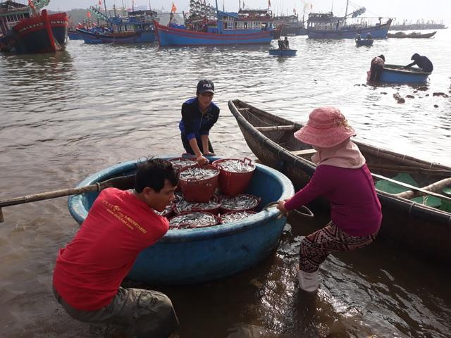 Sau một đêm ra khơi đánh cá cơm, mỗi ngư dân có thể bỏ túi từ 5 - 7 triệu đồng