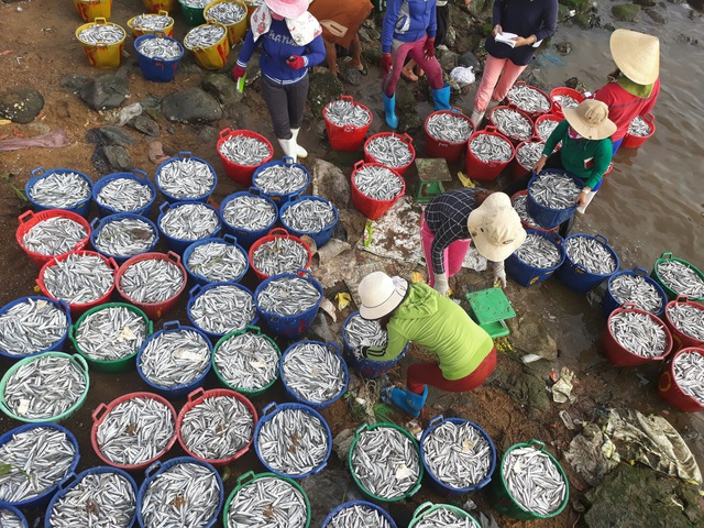 Quảng Ngãi: Ngư dân kiếm từ 5 - 7 triệu đồng chỉ sau một đêm ra khơi - 7