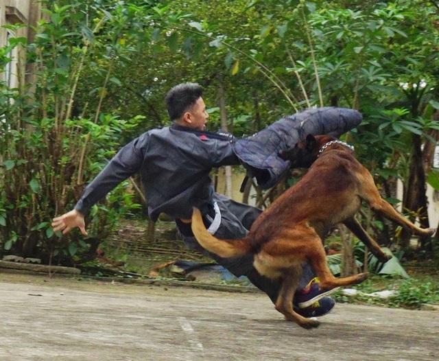 Huấn luyện chó nghiệp vụ trong bài tập trấn áp tội phạm