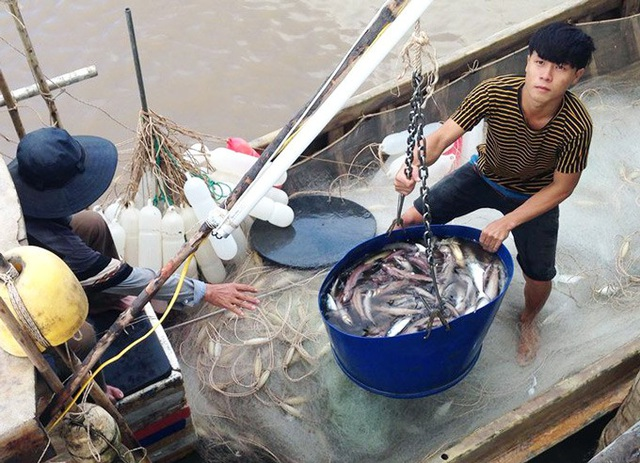 Giá cá khoai đang ở mức cao, ngư dân lãi lớn. (Ảnh: TA).