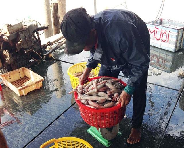 Sau Tết, cá khoai lên giá 105.000 đ/kg, ngư dân lãi 10 triệu/ngày - 3
