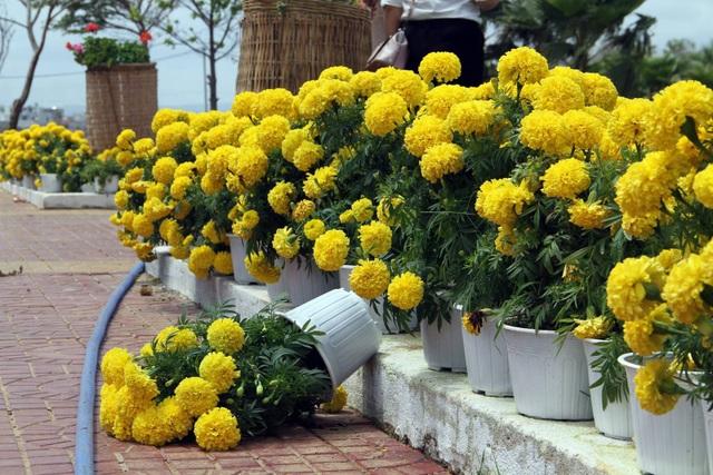 Một số đối tượng còn dùng cả xe ba gác để chở hoa đi nơi khác