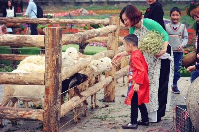 Trẻ con thích thú bên chuồng cừu tại Thung lũng hoa Hồ Tây