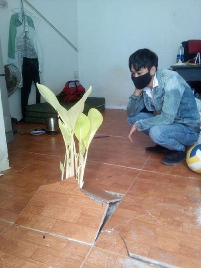 Sinh viên ngỡ ngàng khi thấy cây mọc trong phòng trọ sau kì nghỉ Tết (ảnh: Nguyễn Duy Khanh)