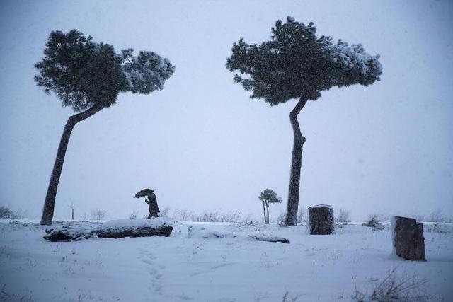 Giao thông đường bộ và hàng không đều bị ảnh hưởng do bão tuyết. Nhiều chuyến bay và tàu bị hoãn. Tuy nhiên giới chức Rome vẫn mở một số ga tàu tới các khu vực có người vô gia cư để hỗ trợ họ trong điều kiện thời tiết khắc nghiệt. (Ảnh: Reuters)