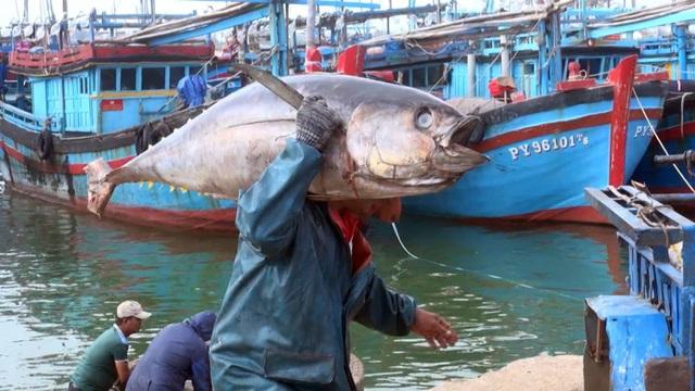 Cá ngừ được đưa lên bờ để chở đi tiêu thụ