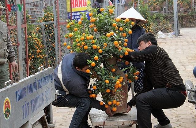 Để chuyên môn hóa, mỗi vườn thường có riêng 1 thợ làm nhiệm vụ nâng, chằng cây cảnh lên xe cho khách. Tưởng chừng đơn giản, nhưng thực tế công việc này lại đòi sự sức khỏe, khéo léo, cận thận của người thợ để cây không bị rụng quả, hay gãy lộc, hoa...