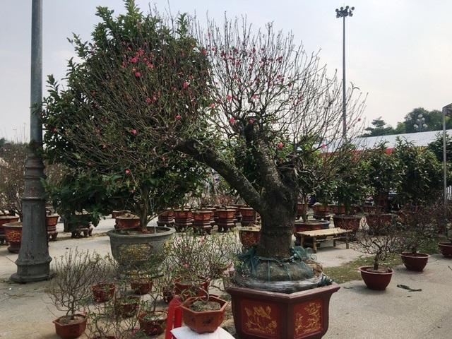 Tại quảng trường Lam Sơn, thành phố Thanh Hóa, nhiều loại hoa, cây cảnh đã được đưa về đây để phục vụ nhu cầu của khách hàng.
