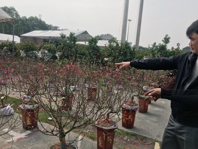 Những cây đào Nhật Tân nhỏ gọn nhưng có giá từ 1 triệu đồng trở lên.