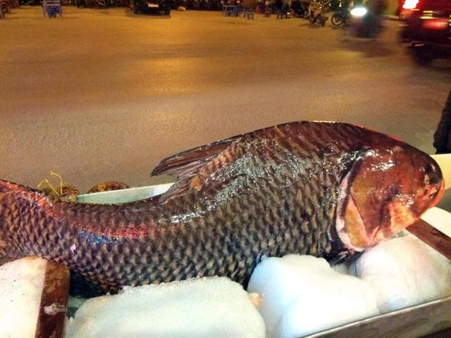 """Chi cả trăm triệu, """"rước"""" cá hô khủng từ Campuchia về Hà Nội ăn Tết - 1"""