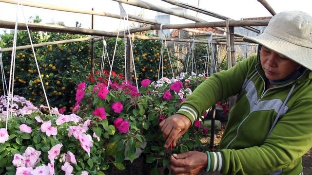 Để hoa luôn được tươi đẹp, khu vườn của ông luôn phải túc trực từ 3-4 lao động để chăm sóc, cắt tỉa cành.