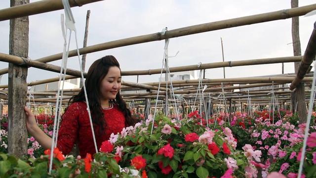 Giá mỗi chậu hoa từ 80.000-100.000 đồng, khách đến đây chụp ảnh, có thể chọn cho mình một chậu hoa đẹp ưng ý mua về.