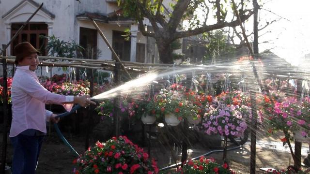 Theo chủ vườn, mỗi ngày có đến hàng trăm người khắp nơi tìm đến để chụp ảnh. Vì lo sợ hư hoa nên chủ vườn cũng hạn chế khách đến. Tuy nhiên, vì khách quá đam mê nên chủ vườn không đành lòng từ chối khách. Khách đến chụp ảnh, rồi đăng trên mạng xã hội nên khiến vườn hoa trở nên càng nổi tiếng