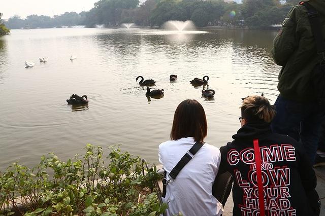 """Niềm vui """"chẳng tày gang"""" ngắm thiên nga tại Hồ Gươm của bạn trẻ Hà Nội - 4"""