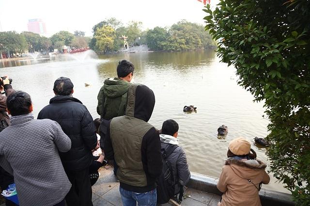 Nhiều bạn trẻ tập trung xung quanh khu vực Hồ Gươm, chăm chú theo dõi và ghi hình đàn thiên nga
