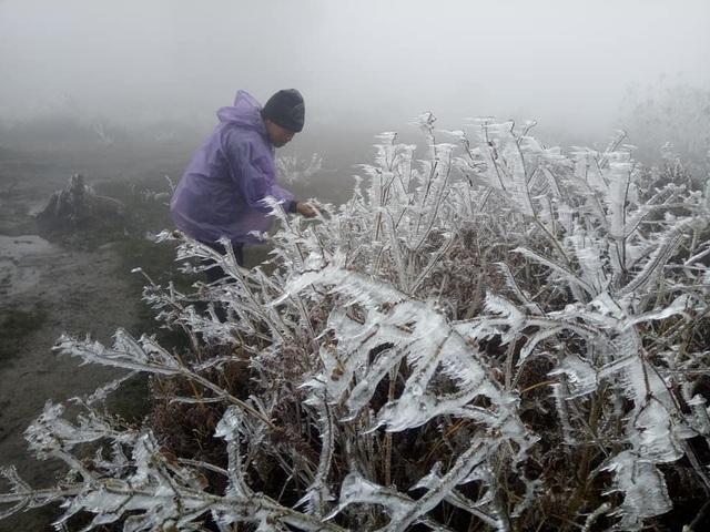 Hình ảnh băng tuyết phủ trắng vùng cao Lào Cai - 2