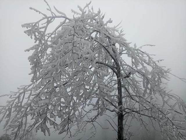 Hình ảnh băng tuyết phủ trắng vùng cao Lào Cai - 3