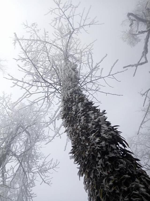 Hình ảnh băng tuyết phủ trắng vùng cao Lào Cai - 6