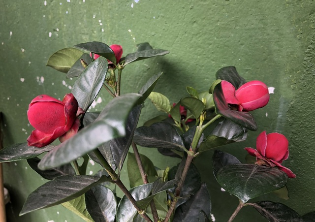 Các chậu hoa bên ngoài đều trông rất bắt mắt