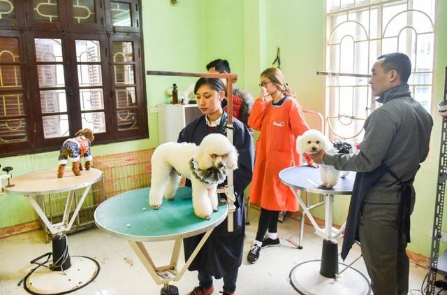 14h một buổi chiều giáp Tết, tại spa cho cún cưng của anh Nguyễn Duy Đạt, không khí huyên náo, rộn ràng hơn thường ngày.