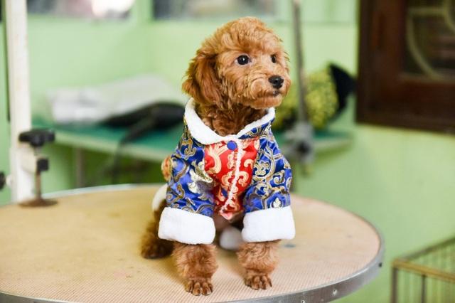 Bên cạnh nhu cầu nhuộm lông, làm móng cho cún, Tết này, nhiều bạn trẻ còn sắm áo dài chấm bi hoặc váy điệu đà, áo trần bông cho những chú cún.