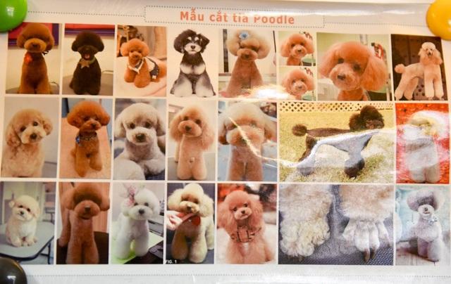 Các mẫu tỉa lông cho chó Poodle được ưa chuộng mùa Tết này.