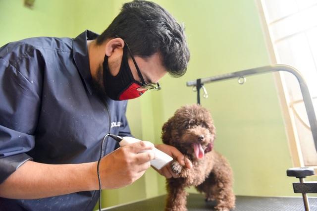 Ngoài việc nhuộm lông cho cún, nhiều khách còn cho cún cưng đến cắt, tỉa, vẽ móng. Giá thành cho dịch vụ sơn móng có thể dao động từ 100-700 nghìn đồng/bộ tuỳ độ phức tạp.
