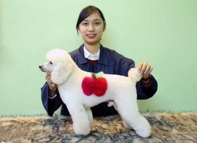 Hai chú chó Poodle có bộ lông trắng sẽ được cắt tỉa lông, nhuộm màu với 2 ý tưởng khác nhau. Phú Mỹ quyết định tỉa lông hình trái táo...
