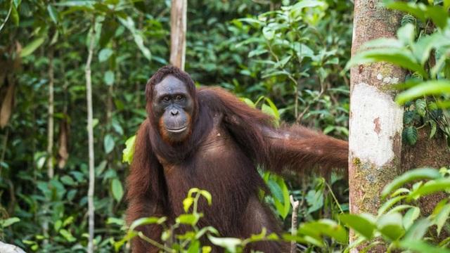 Hơn 1.000 loài động vật có vú mới được phát hiện trong vòng 12 năm qua - 1