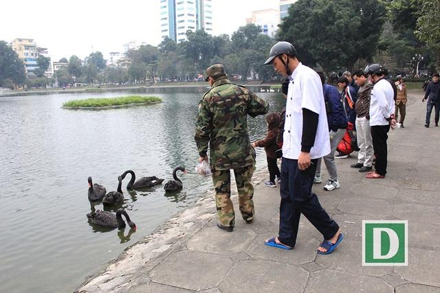Sáng nay, 7/2 vẫn rất đông người dân đến hồ Thiền Quang để ngắm nhìn những chú chim thiên nga thú vị này (Ảnh: Trần Thanh).