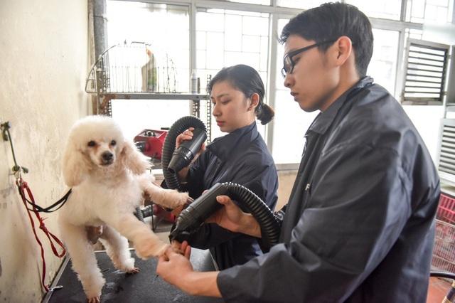 Cún cưng được đưa đi tắm và sấy lông sau khi hoàn thành việc tỉa lông và nhuộm màu.